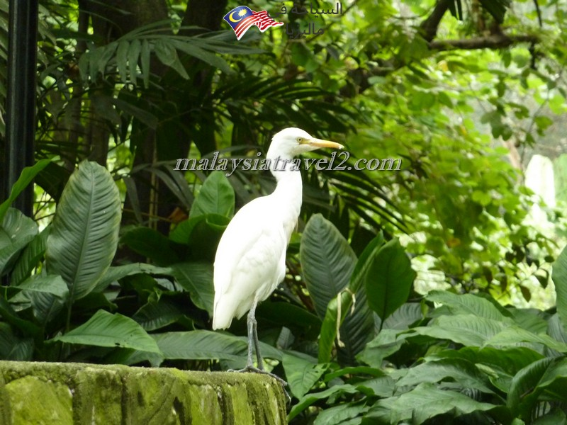 kl-bird-park7