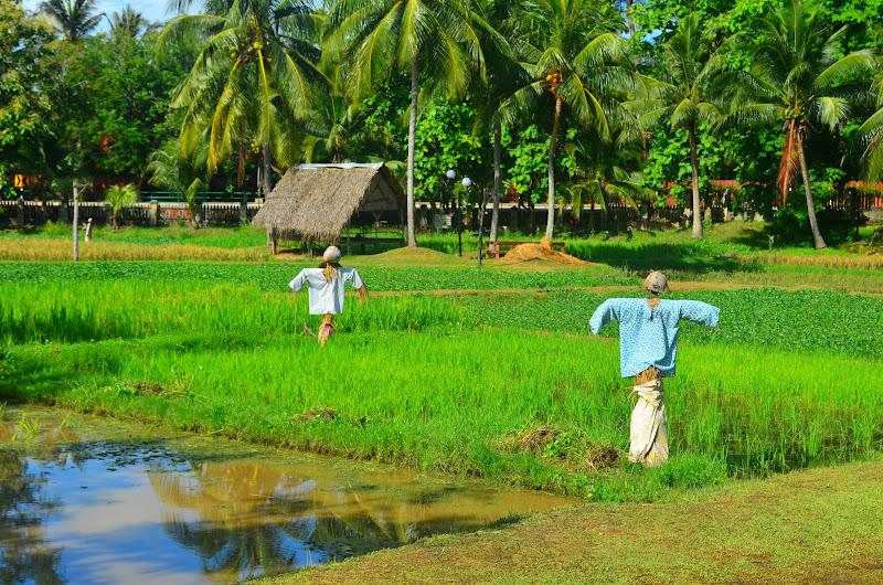 Laman-Padi-Rice-Museum