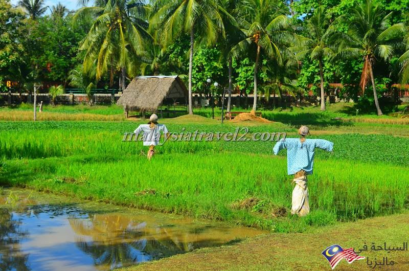 Langkawi Rice Museum3