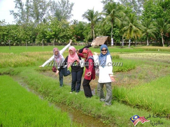 Langkawi Rice Museum7