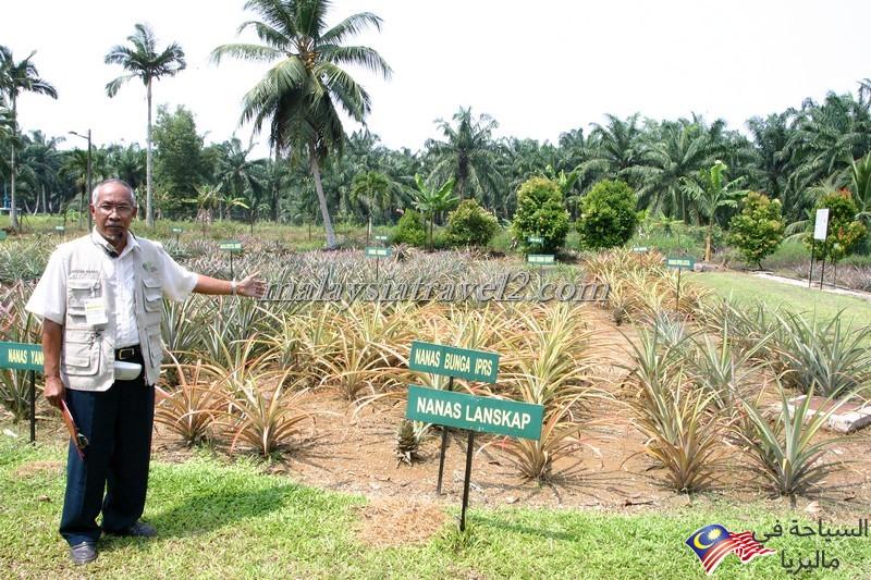 Pineapple Museum2