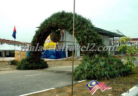 Pineapple Museum8