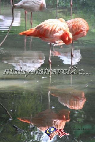 Zoo Negara10