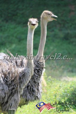 Zoo Negara16