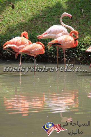 Zoo Negara6