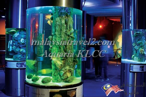 aquaria-klcc-kuala-lumpur-5