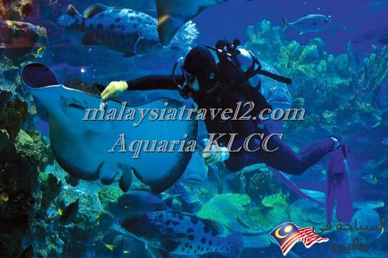 aquaria-klcc-kuala-lumpur-6