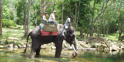 langkawi_elephant