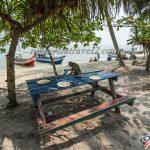 شاطئ القرود الرائع في بينانج monkey beach penang