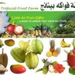 حديقة الفواكة في بينانج tropical fruit farm